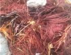 石家庄环保电缆回收价格