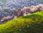 4月红山大峡谷-赛里木湖-天鹅泉-伊犁杏花沟-那拉提草原