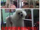 丹东温馨宠物美容师培训学校