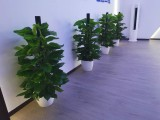 昌平专业墅庭院花园设计施工园林园艺设计绿化工程养护