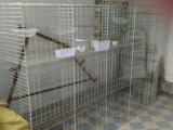鸽子笼生产厂家A南平市鸽子笼生产厂家A鸽子笼生产厂家批发