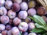 四川宜宾有卖脆红李子苗,汶川出售红脆李树苗,哪有脆红李嫁接苗