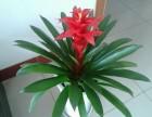花卉租赁盆栽出租和销售开业花篮花卉养护公司办公室租花