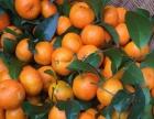 广东连州市正宗沙糖桔砂糖橘沙塘橘易剥甜大量批发