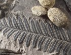 悦古成都鉴定拍卖化石