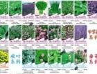 海大卖货郎园艺 海口最全的花卉种子 蔬菜水果种子