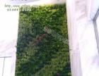 现代时植物墙加盟 种植养殖 投资金额 1-5万元
