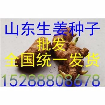 e3cd39068f6881b634ad502bc1420b68.jpg