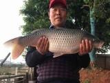 魚竿釣魚魚竿品牌