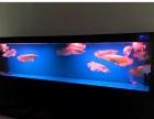 溧阳鱼缸定做精品鱼缸出售送货上门