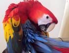 出售金剛鸚鵡 葵花鸚鵡 亞馬遜鸚鵡 小太陽鸚鵡 迷你金剛鸚鵡