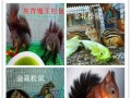宠物用品饲料猫粮猫砂兔粮提摩西苜蓿干草饮水器笼子
