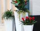 郫县菁蓉镇办公绿植花卉租售,私家花园设计搭建,绿化施工养护
