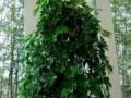 鲜花绿植、承接植物出租租赁、盆景租摆、花卉出租