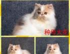 猫舍加菲种猫转让3种母2种公