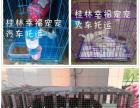 桂林宠物托运,送保险,宠乐游桂林分公司