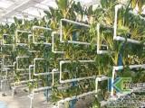 无土栽培的种类及无土栽培优势介绍