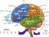 北京西直門國翰教育認知力課程介紹