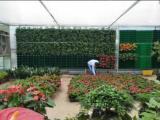北京立体绿化植物-专业的立体绿化植物市场价格