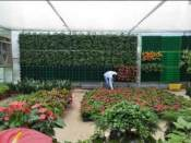 特色立体绿化植物 靠谱的立体绿化植物供应商推荐