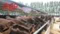 波尔山羊多少钱一只,白山羊价格,黑山羊价格免费运输