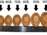 南日鲍鱼,鲍鱼干,干货批发,每斤30头-
