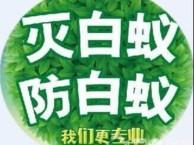 东莞万江灭白蚁公司 杀虫灭鼠 彻底清除蚁患