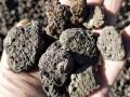 火山石滤料 水处理火山石 无土栽培 多肉植物专用