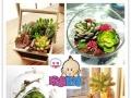 玩逸生活植物微景观DIY加盟店从小玩意中发现商机