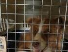 潍坊宠乐游 国内国际宠物托运 宠物速运 价格低