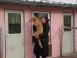五里店宠物寄养猫狗单独寄养长期寄养托管宠物可接送