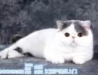猫舍出售宠物猫咪加菲英短美短布偶暹罗 均有 非诚勿扰