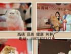 [宠物猫] 【美国短毛猫】银虎斑蝴蝶斑 美短起司