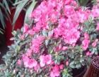 自己栽培花卉盆景盆栽