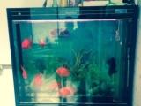 出售鱼缸,地滤,