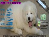 纯种健康的大白熊多少钱一只在哪能买到