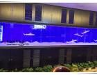 衢州大型鱼缸