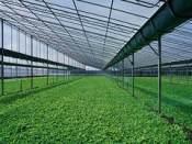 广西智能温室 想建智能温室就到众诚温室