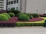 永兴县专业园林绿化养护草皮苗木修剪清除树木病虫害