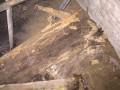 石龙白蚁防治,中堂白蚁防治中心,麻涌防治白蚁所