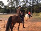 骑马,郊区野骑,一起浪