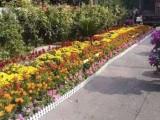 北京北京周邊室內盆栽租賃