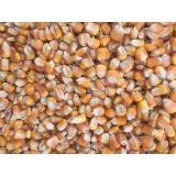 常年求购玉米 菜饼 小麦 高粱 大豆 菜粕 棉粕 麸皮