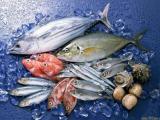 海南巴沙鱼海鲜进口报关许可证审批