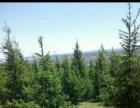 宾县 大顶山土地 12000平米