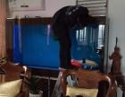 深圳市内海水鱼淡水鱼维护承治各种长期,治鱼病,鱼缸清洗