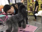 鞍山靠谱的宠物美容培训学校?