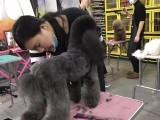 邯郸宠物美容培训,邯郸宠物美容学校,邯郸宠物美容师培训学校
