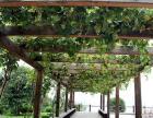 北京怀柔区小区绿化别墅屋顶绿化防腐木栏杆地板楼梯亭子
