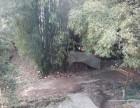 沙坪坝土湾专业下水道疏通马桶疏通维修